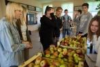 jablka-2014 (5)