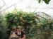 Wycieczka doHotelu Ossa iOgrodu Botanicznego wPowsinie 2011 (30)