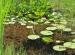 Wycieczka doHotelu Ossa iOgrodu Botanicznego wPowsinie 2011 (28)