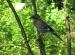 Wycieczka doHotelu Ossa iOgrodu Botanicznego wPowsinie 2011 (38)